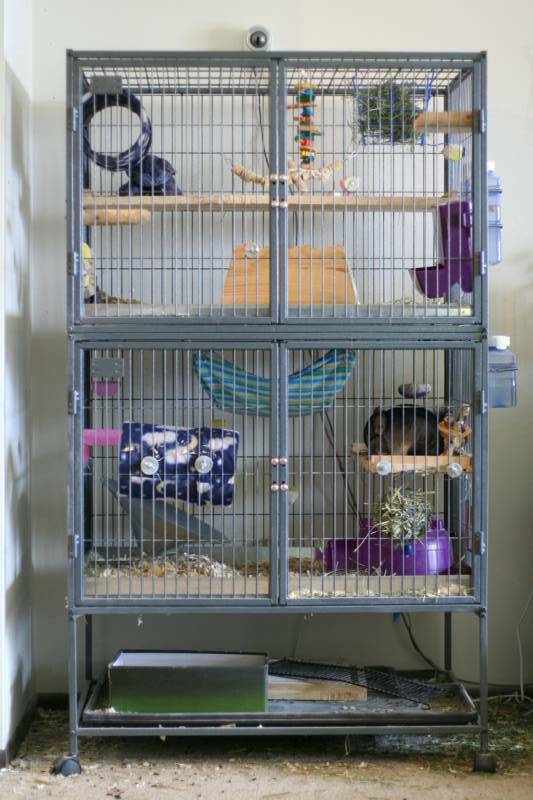 chinchilla cages housing and accessories. Black Bedroom Furniture Sets. Home Design Ideas
